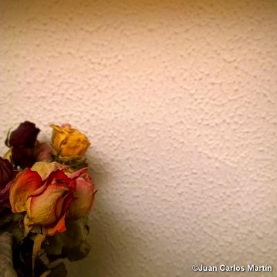 Foto_28-Lumia1020