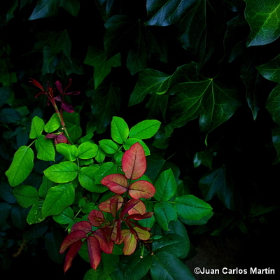 Foto_29-Lumia1020
